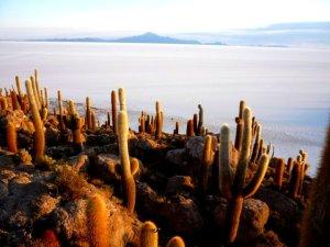 Cacti abound