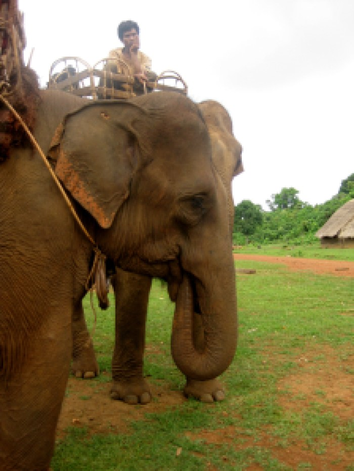 Hopefully a happy elephant!
