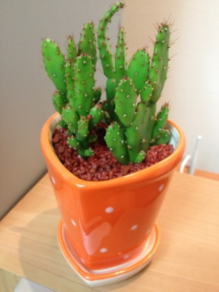 This is Norman, the Cactus